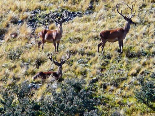 The Inch family share their experiences producing deer velvet, the all-natural health supplement in high demand