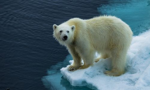 9 reasons your next trip should be an Arctic ship expedition to Spitsbergen
