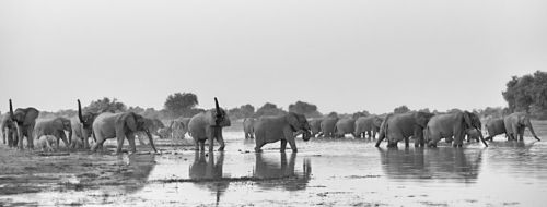 The Revival of Zakouma National Park's Elephant Population: Interview with Rian Labuschagne