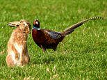 Hare appears to be listening to his bird friend just like in children's tale