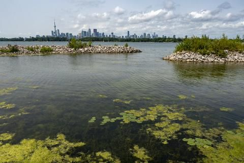 Exploring the reclaimed wetlands of Toronto's Tommy Thompson Park