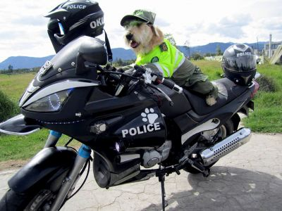 Dedicated stray dog gets rescued and lands a job on the police force