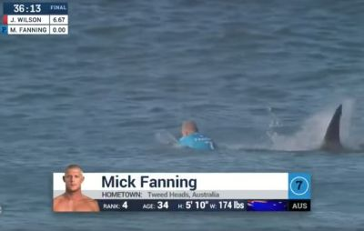​Pro Surfer Who Punched Attacking Shark in the Face Nearly Attacked Again