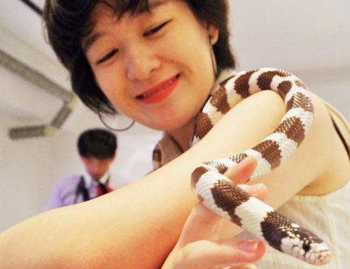 Could you dine with snakes at this cafe in Japan?