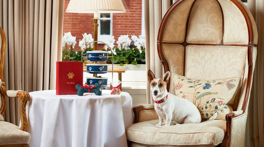 6 Dog-Friendly Hotels In London