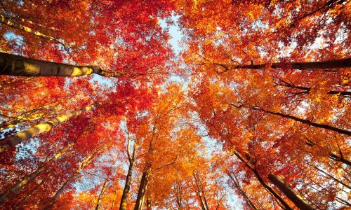 Instagram gallery: 12 breathtaking autumnal landscapes