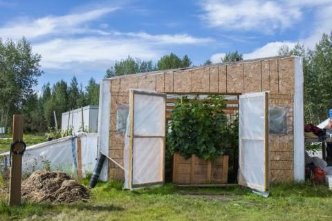 Tr'ondëk Hwëch'in protecting food security in Dawson City, Yukon
