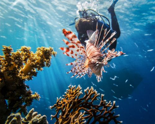 Scuba Diving on the Road: Turn Your Hobby Into a Side Income