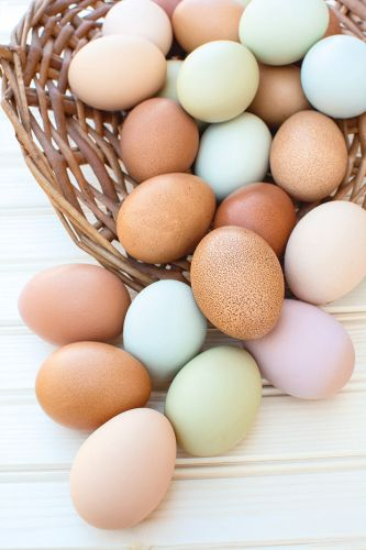 What you need to know about lead in backyard eggs