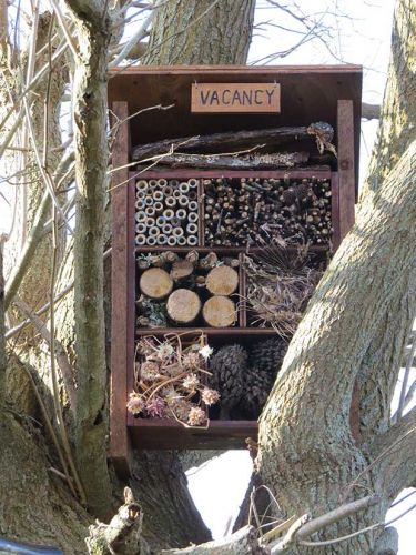 DIY project: Build a 'Bug Hotel' to attract beneficial insects