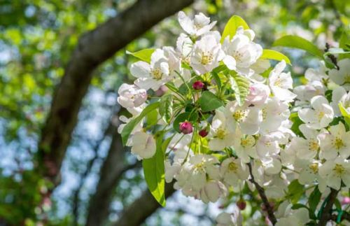5 easy things to do to ensure a fruitful future for your orchard