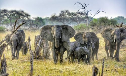 Walking with giants: Elephant watching in Zimbabwe's Hwange National Park