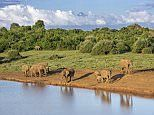 An African adventure fit for a Queen