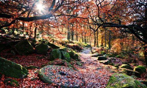 Go for gold: Where to see Britain's best autumn colours