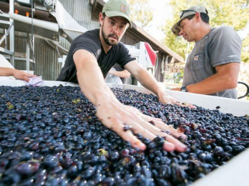 Talking Wine with Central Coast Winemaker Chase Carhartt