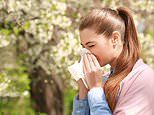 Your guide to global sneezing etiquette: The basic protocols in Japan,Tonga Brazil and Poland