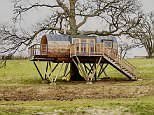 You'll sleep like a log! Luxury treehouse perched in an oak tree opens its doors to holidaymakers