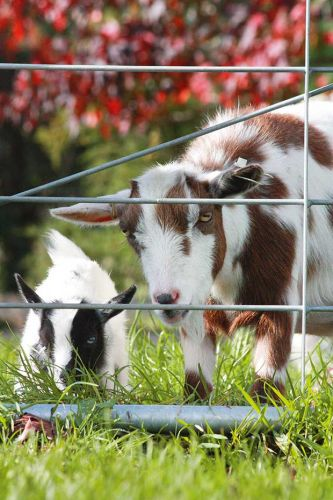 How to import farm animals to New Zealand