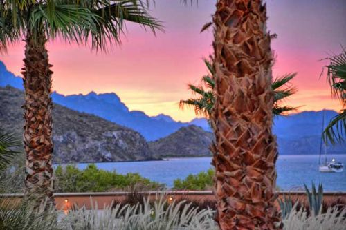 Flying Rays in the Sea of Cortez