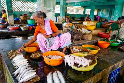 The Sights and Sounds of South India: A Traveler's Journey