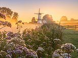 Mesmerising photos by Albert Dros show how magical the Netherlands can be in spring