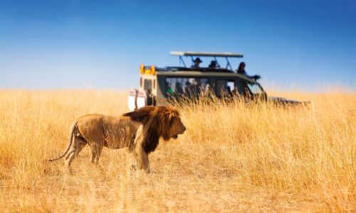 20 top tips for going on safari as chosen by you