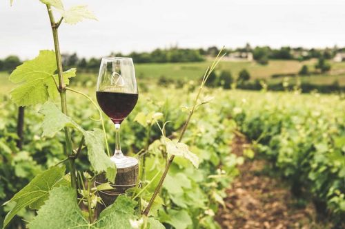 Chilean Luxury Wine Tour: Discover Colchagua Valley by Private Jet