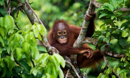 7 things you must do in Borneo