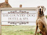 In the doghouse: Welcome to the UK's most in-demand canine hotel
