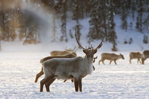 Modelling threats to caribou in Ontario's Ring of Fire