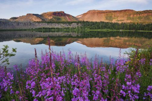 A Wilderness Adventure in a National Forest