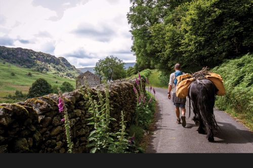 Hiking with fell ponies in the Lake District