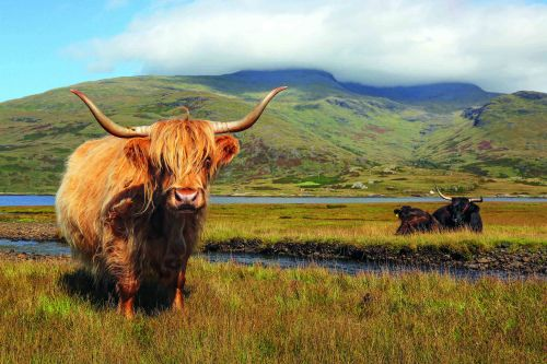 Wide-eyed on the wild isles: Exploring Scotland's Inner Hebrides