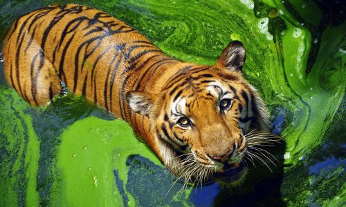 Tiger, tiger burning bright: 10 top spots to see India's tiger in the wild