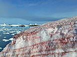 Watermelon snow: Remarkable pictures show the Antarctic turning RED