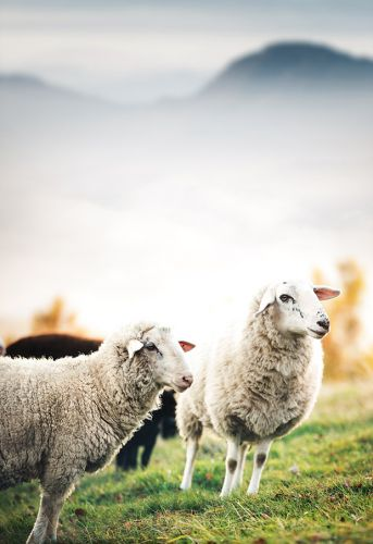 11 tasks for caring for livestock this May