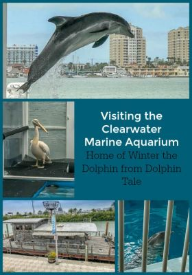 Visiting The Clearwater Marine Aquarium Travel Very