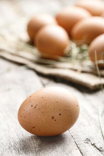 6 ways to work out if your hens are laying