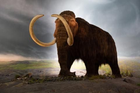Wildlife Wednesday: Can the woolly mammoth be brought back from extinction?