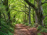 Exploring the Fosse Way - a quintessentially English road at the heart of Roman Britain