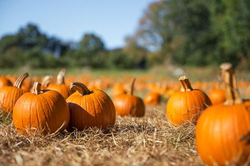 9 of the UK's best pumpkin patches to visit this autumn