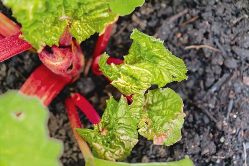 What to do in the vegetable garden and orchard in August