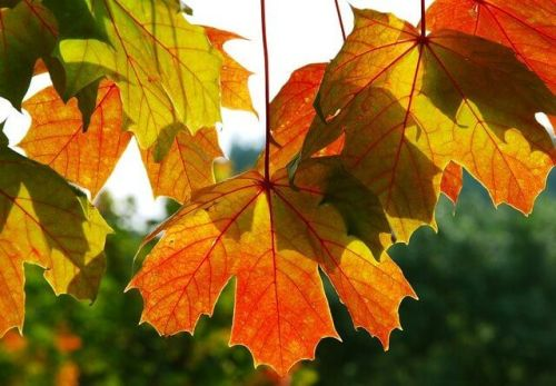 Ireland In Autumn: Dreams and Advice