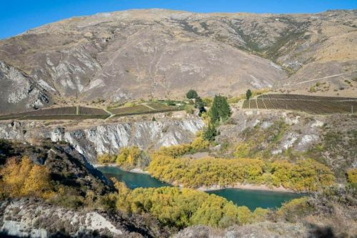 Gibbston Valley Wineries: The Ultimate Guide to Wine Tasting Near Queenstown
