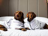 Linen-supplier to five-star hotels Tielle Love Luxury launches plush bathrobe for DOGS