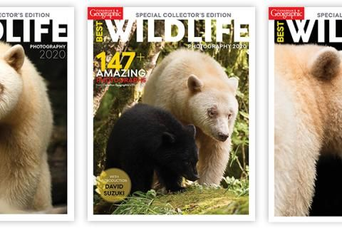 Help us choose the cover for Best Wildlife Photography 2020