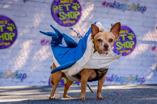 All the cutest photos from the annual Tompkins Square Halloween Dog Parade