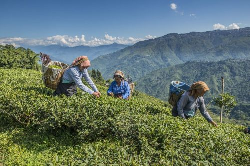How to drink tea around the world