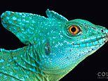 Stunning Images showcase some of the world's most endangered animals