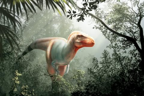 New species of tyrannosaurus discovered in Alberta